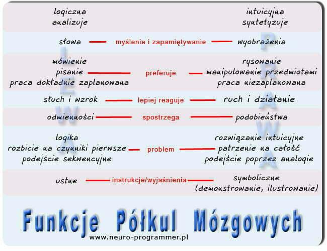 Półkule Mózgowe - Funkcje