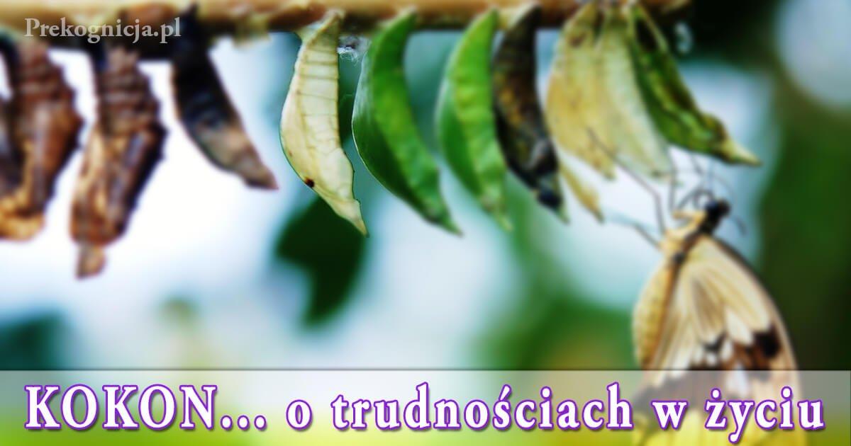 Kokon Motyla - przypowieść o trudnościach w życiu