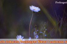 o Miłości: Wiatr i Kwiat | przypowieść
