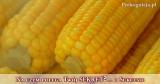 Rolnik i kukurydza: O osiąganiu Sukcesu i relacjach z ludźmi | przypowieść